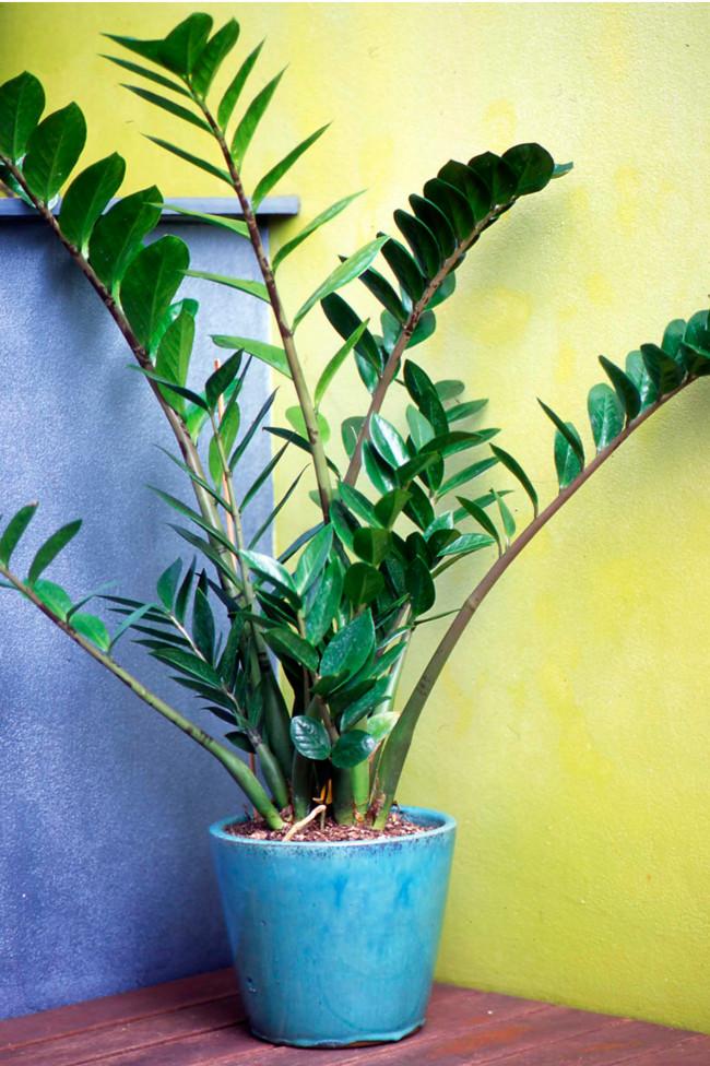 комнатные растения для кухни